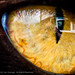 In The Eye Of A Cat by *ian*