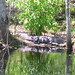 Alligator Canal DSCN3818
