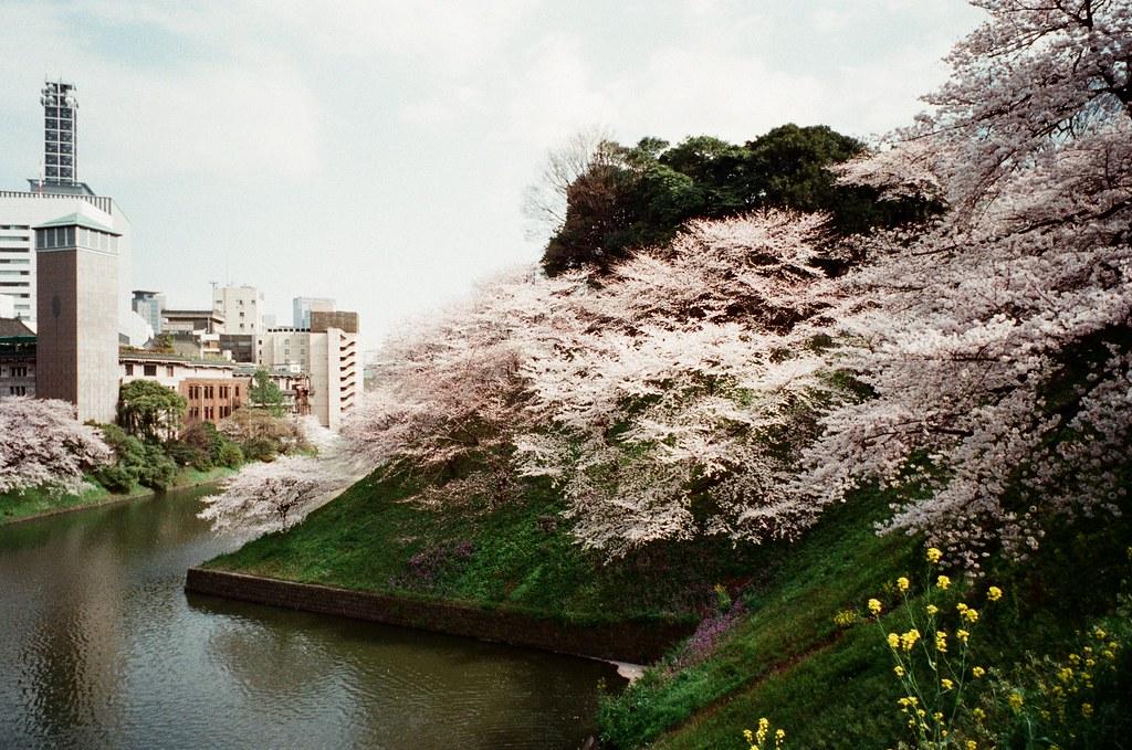 北の丸公園 (Tokyo Japan)