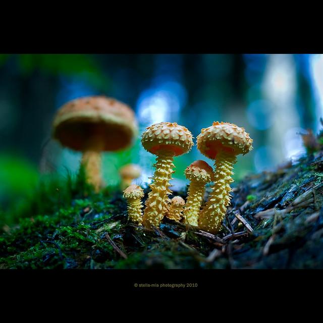 we are fungi family