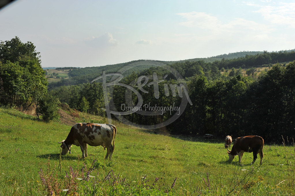 Gjilan, Lopet e Kosoves