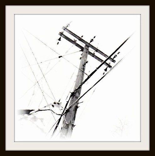 county bw snow tree film electric blackwhite md power framed telephone maryland cable line pole frame electricity powerline snowfall ilford cumberland allegany wormseye hazenroad javcon117 frostphotos