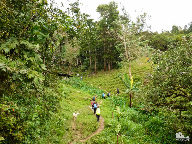 Trail to Mt. Mauyog