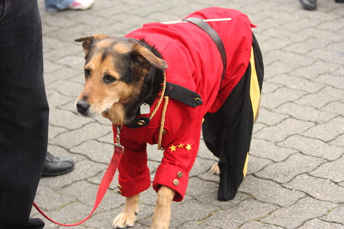Mountie dog!