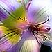 Flower by sambasupernova