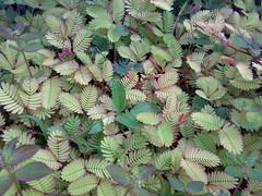 flower(0.0), fauna(0.0), ostrich fern(0.0), ferns and horsetails(0.0), vascular plant(1.0), leaf(1.0), plant(1.0), flora(1.0),