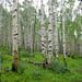 CDT2010_trees