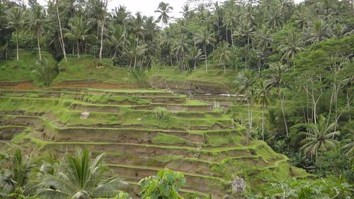 18.Jul.10 Bali