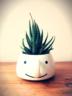How are you, Haworthia?