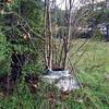 Sewer Tree