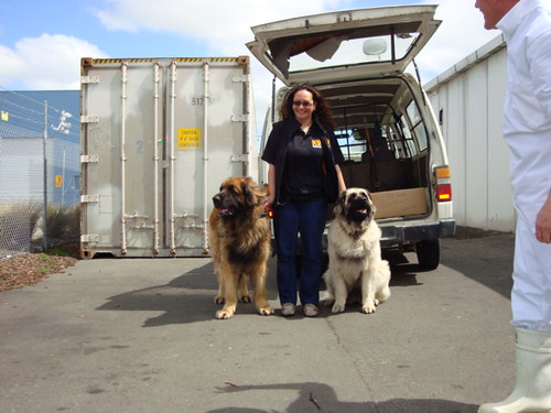 Lee with Elshas Leonberger