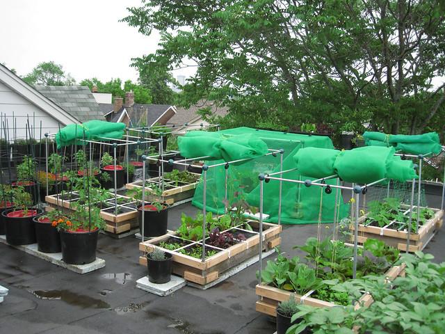 Rooftop Vegetable Gardens : Rooftop Vegetable Garden 2010  Flickr - Photo Sharing!
