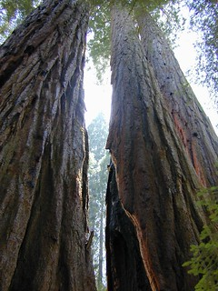 Sequoia Groves