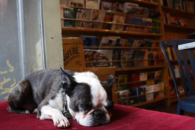 bookstore dog