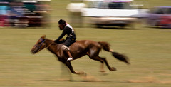 english riding(0.0), jumping(0.0), reining(0.0), barrel racing(0.0), animal sports(1.0), horse racing(1.0), equestrianism(1.0), western riding(1.0), racing(1.0), eventing(1.0), mare(1.0), stallion(1.0), equestrian sport(1.0), sports(1.0), mammal(1.0), horse(1.0), mustang horse(1.0), jockey(1.0),