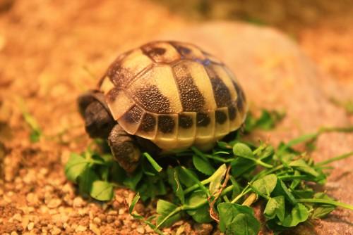 Baby tortoises, 23 August 2010