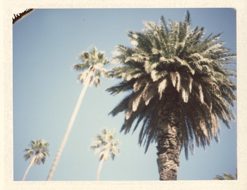 St Kilda palm trees | Polaroid