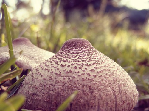 nature mushroom grass flora dof bokeh perspective northcarolina ground toadstool wilmingtonnc wormseyeview fungii bokehlicious