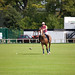 Pictures of Polo Ponies in Phoenix Park
