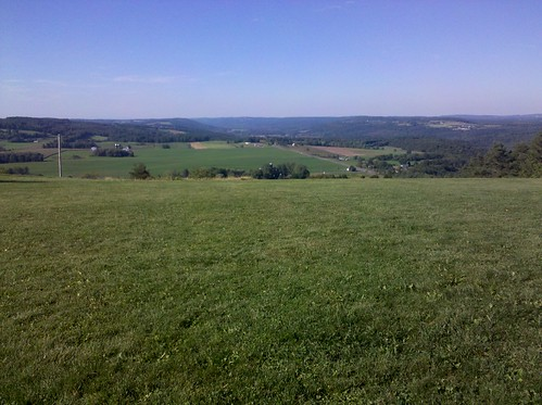 forest landscape view highland