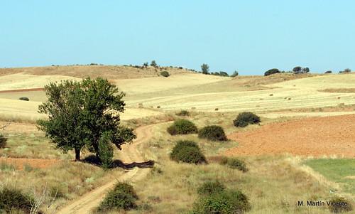 Campos de Castilla la Vieja