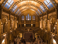 Darwin, Natural History Museum, London, UK