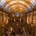 Darwin, Natural History Museum, London, UK by weesam2010