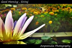 Good Morning , Siriraj /  อรุณสวัสดิ์จากศิริราช