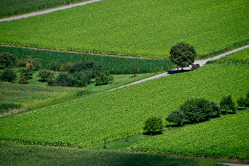Green Tree and Green Field | by J e n s