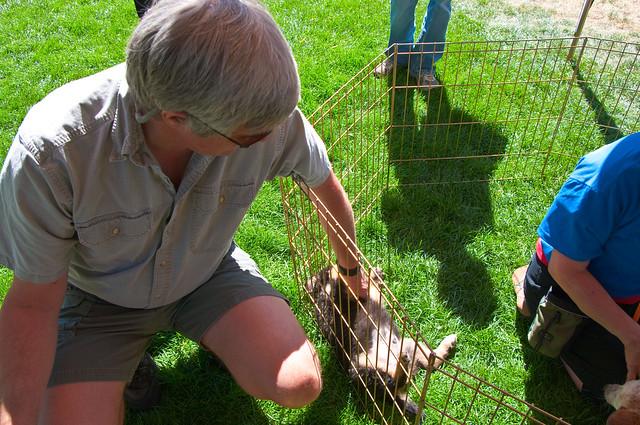 Arizona Dog Adoption Events