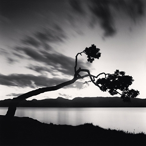 Kussharo Lake Tree, Study 8, Kotan, Hokkaido, by Michael Kenna 2007