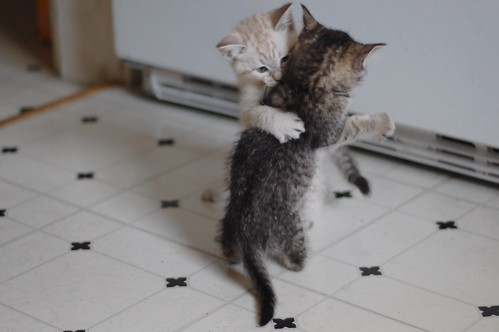 Hold me closer, Tiny Tabby