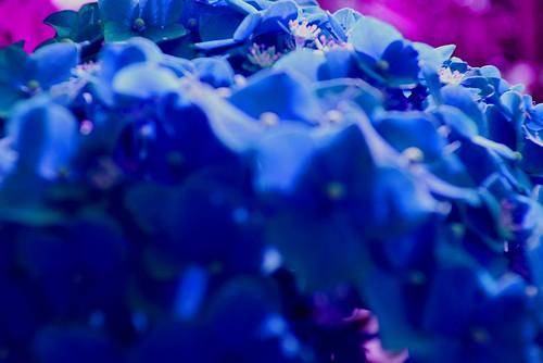 IMGP4084rd-blue