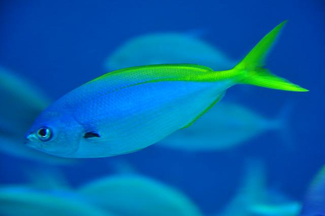 Small aquarium fish for Small pet fish