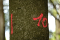 Tree #10 - Photo of Berg
