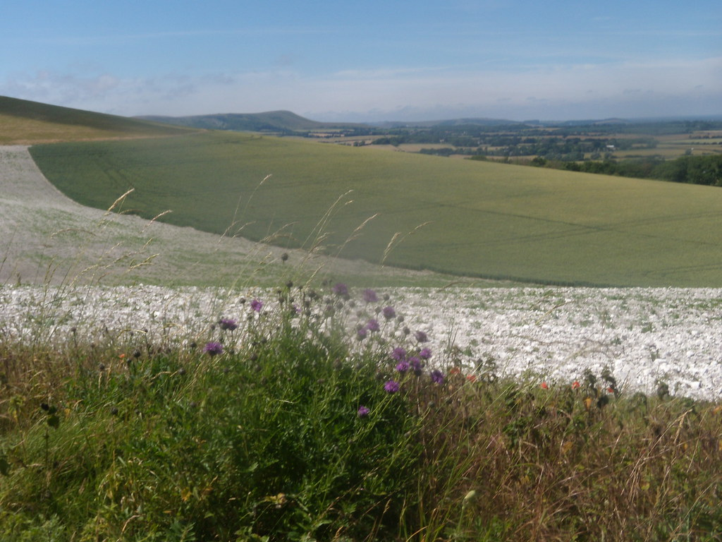 View near the Long Man Knapweed in foreground. Berwick to Birling Gap