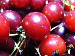 berry, acerola, produce, fruit, food, myrciaria dubia, cranberry,