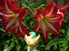 amaryllis belladonna, lily, flower, plant, flora, hippeastrum, petal,