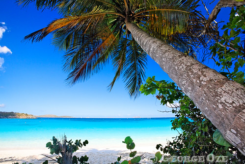 Low Angle View of a Leaning Palm Tree on a Tropical Beach