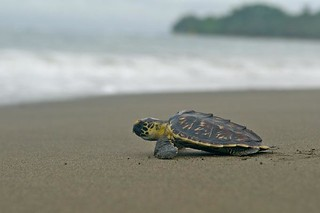 Photo by SEE Turtles