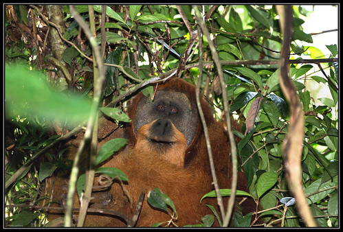 gunung leuser photo