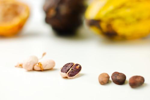 Fresh Cacao from São Tomé & Príncipe