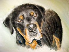 dog breed, animal, dog, rottweiler, carnivoran,