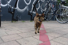 cat on Amsterdamsestraatweg, Utrecht