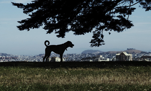 dog at Alta Plaza, San Francisco (2009)