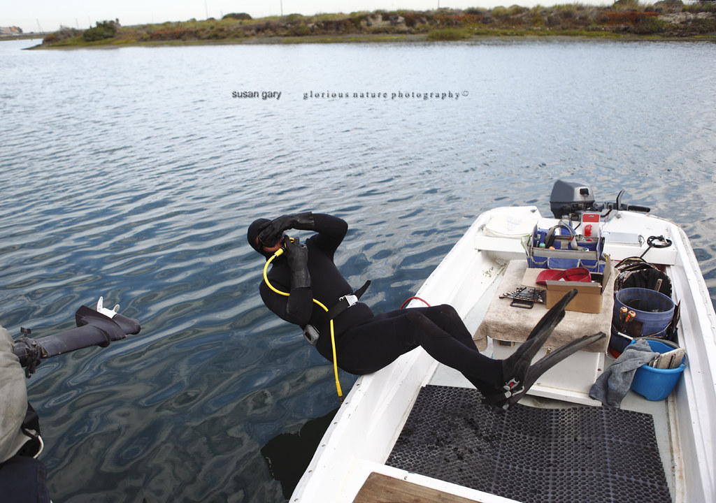 Scuba Diver Falling Into Water