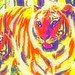 Small photo of Tyger, Tyger Burning Bright . . .