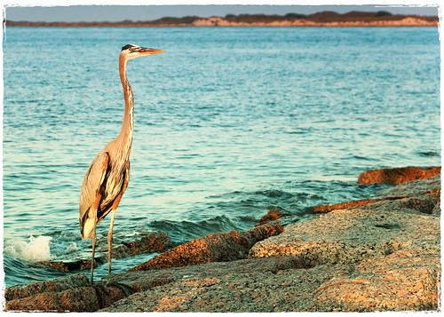 ocean sea sky sunlight color water rocks solitude crane shore meaning fineartphotography naturesfinest d80 frankhg notfordownload
