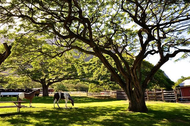 Kualoa Ranch クアロア牧場