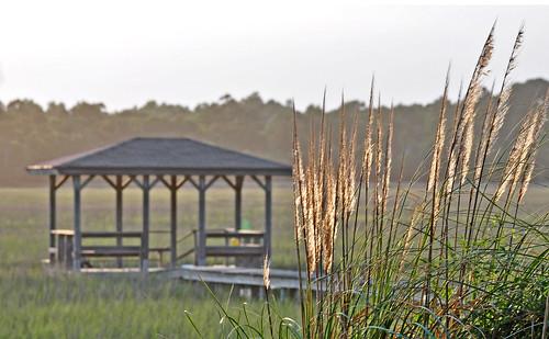 sunset vacation sc grass dock southcarolina marsh ornamental pawleysisland